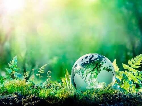 Ecología y sostenibilidad